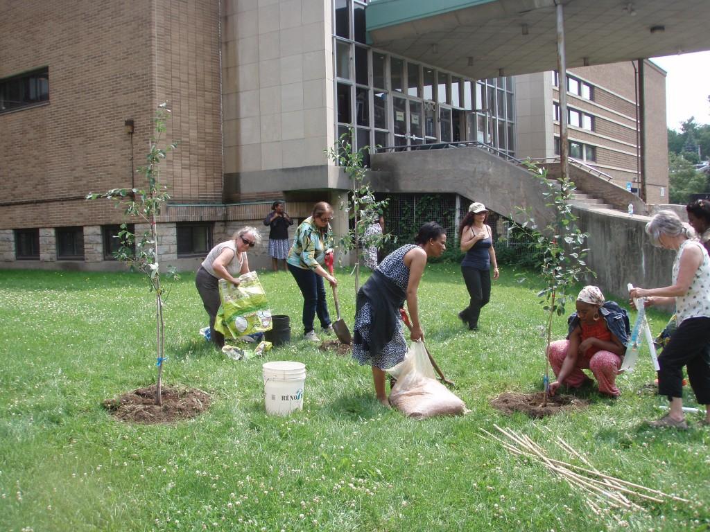 Plantation d'arbres à Outremont